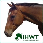 Irish Horse Welfare Trust ambassador Moscow Flyer