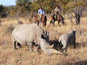 Zara's Planet and Irish Horse Welfare Trust organising charity Safari in Africa
